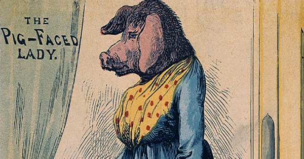 Pig-Faced-Women-In-Traveling-Shows-Were-Actually-Drunk-Shaved-Bears-In-Dresses
