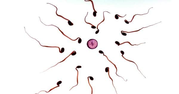 Scientists spell out an innovative strategy for a male contraceptive agent