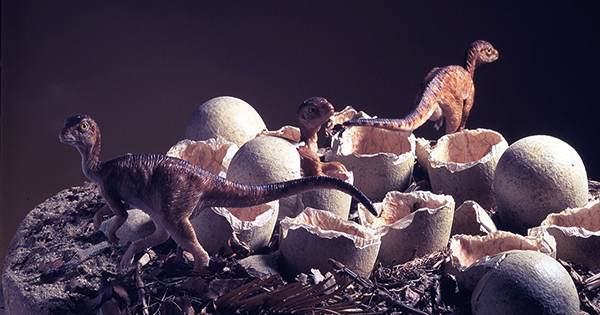 World-First Fossil Shows Dinosaur Sitting On Clutch Of Eggs Like A Bird
