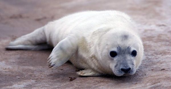 Seal Freed From Plastic Hoop Stuck Around Its Neck for Over 2 Years