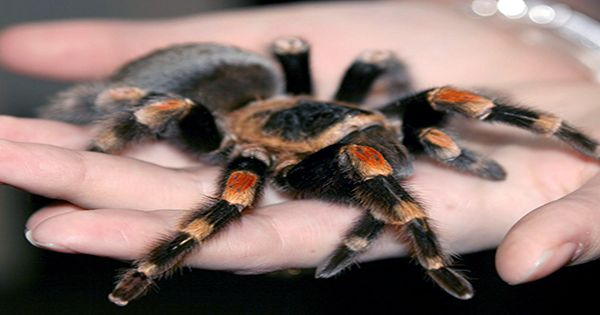 Venomous Spiders Fleeing Australia Floods Could Seek Refuge In People's Homes, Experts Warn