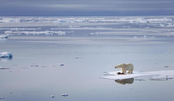 Antarctic-Ice-Sheet-Melting-causes-dramatic-Sea-level-Rise-that-keeps-Global-Warming-1