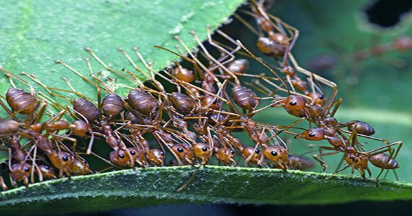 Newly Described Ant Species Becomes First Named To Honor Gender Diversity