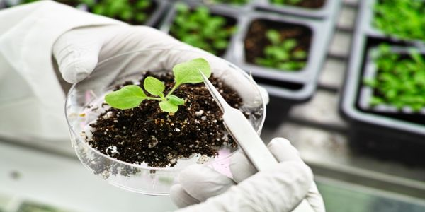 Research-need-to-improve-Plant-Disease-Detection-Systems-to-Prevent-Pandemics-1