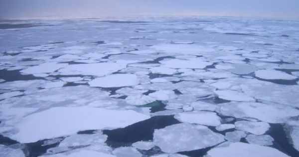 Satellite data shows Rapid Demise of Sea Ice in the Arctic Ocean