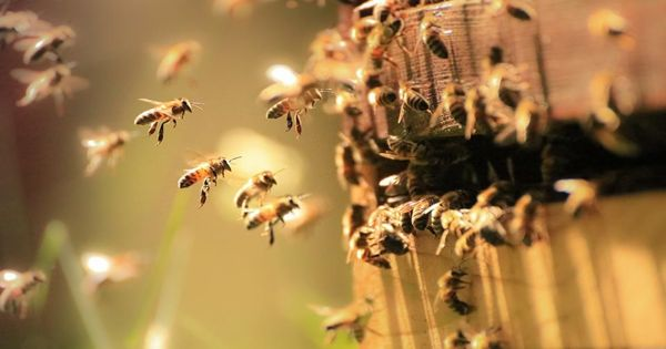 Scientists observe Pollinators in terms of Economic and Ecological Perception
