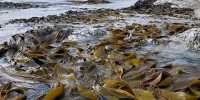 Study Revealed Earthquake creates Ecological Opportunity in Coastal Species