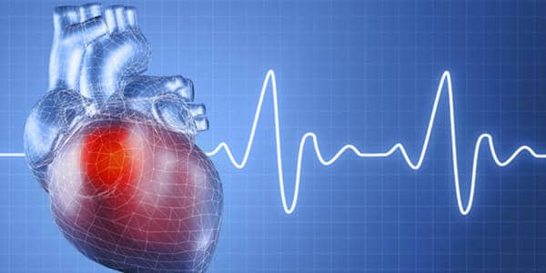 Thin-and-Weak-Bones-are-strongly-related-to-Womens-Heart-Disease-Possibility-1