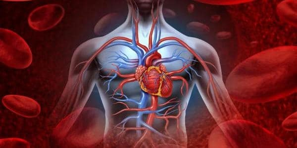 Working-Hours-linked-natural-body-clock-associated-with-cardiovascular-risk-1