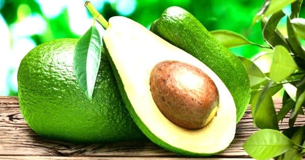 A Compound in Avocados may tender a Way to Better Leukemia Treatment