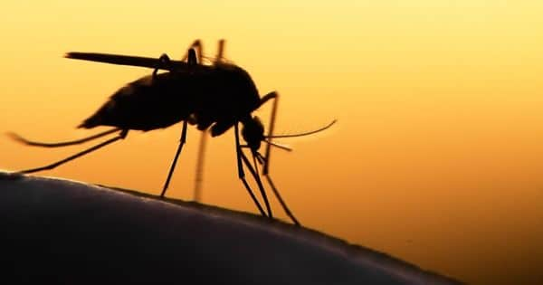 Altering a Mosquito's Gut Genes can Stop Spreading Malaria