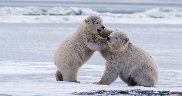 Biden Suspends Trump's Oil Drilling Leases in Alaska's Arctic Wildlife Refuge