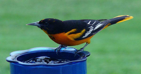 Can you Beat a Bird at Spotting a Magic Trick?