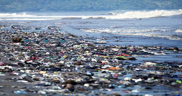 Galapagos Seawater, Marine Animals and Beaches Infested with Plastic Pollution