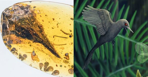 Hummingbird-Sized Dinosaur, thought to be Smallest Known, is Actually New Weird Lizard