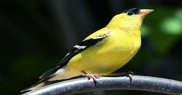 Hundreds of Birds are Dying Across America and Nobody Knows Why