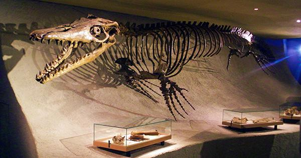 New Giant 8-Meter Mosasaur Offers Snapshot of Most Dangerous Ecosystem of all Time