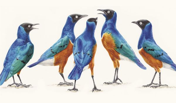 Researchers-are-Investigating-on-how-Birds-Make-Decisions-1