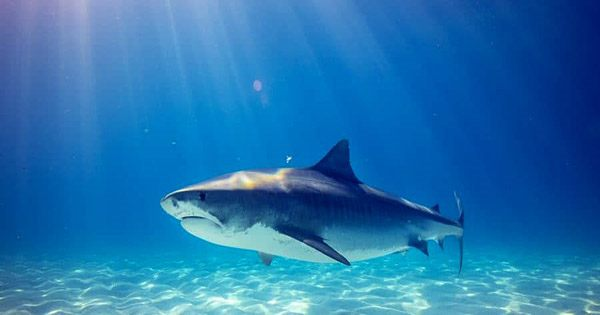 3,000-Year-Old Remains Show the Oldest Known Shark Attack Victim Met a Grisly End