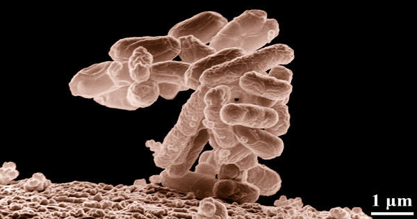 A New Strategy for Microorganisms Produces Natural Products