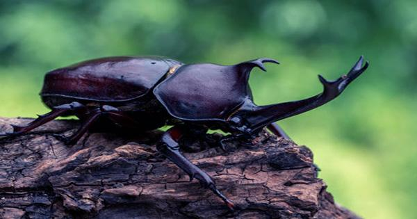 Beetle-Filmed-Walking-Underwater-on-the-Underside-of-a-Puddles-Surface-1