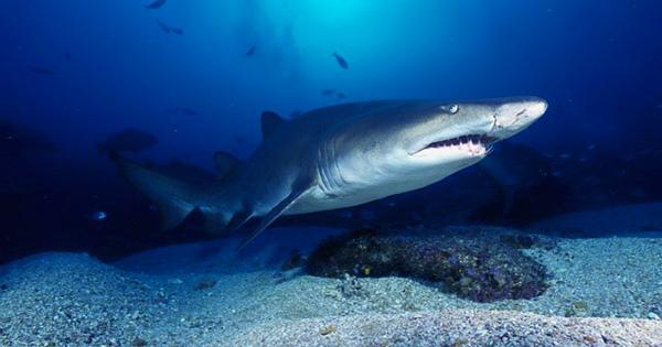 Fossil Sharks Teeth Found in Jerusalem were Buried there in Biblical Times