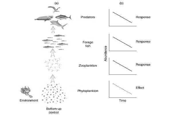 Invasive-Marine-Species-can-be-Controlled-by-Examining-the-Food-Chain-1
