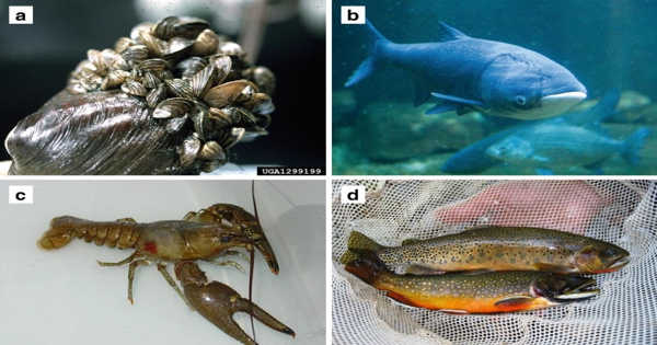 Invasive Marine Species can be Controlled by Examining the Food Chain