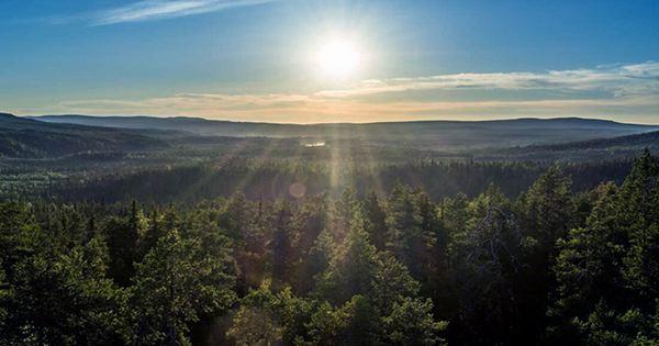 Lapland Bakes in 33°C Heatwave, Hottest Temperature in a Century