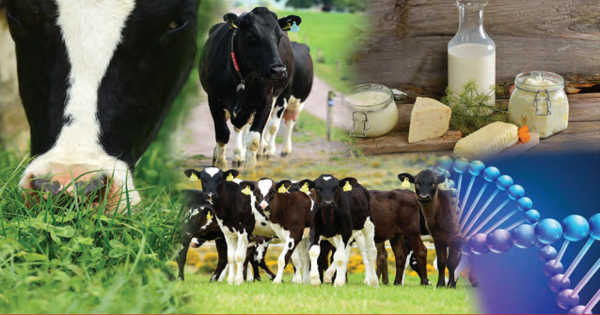 Milk Production can be made more Cost-effective and Sustainable through Research