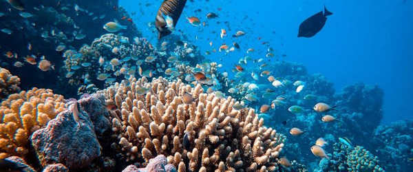 New-Coral-Reef-Health-Models-are-being-Developed-1