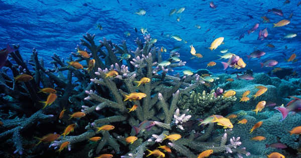 New Coral Reef Health Models are being Developed