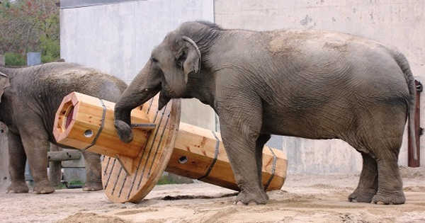Psychologists Show Elephants have Personalities to Solve Problems