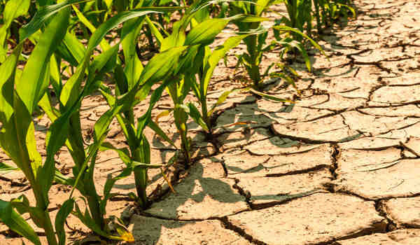 Researchers-Devised-a-Way-to-Protect-Seeds-to-Resist-Drought-1