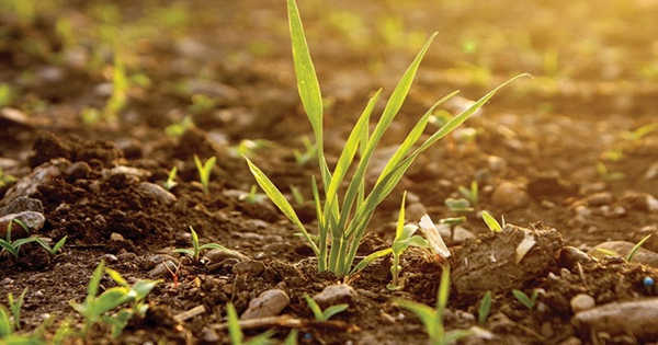 Researchers Devised a Way to Protect Seeds to Resist Drought