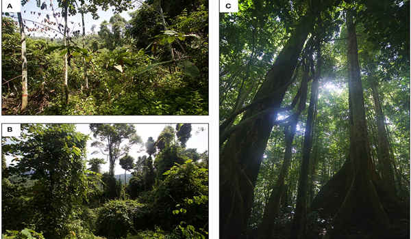 Researchers-are-Working-Together-for-Transforming-Global-Tropical-Forests-1