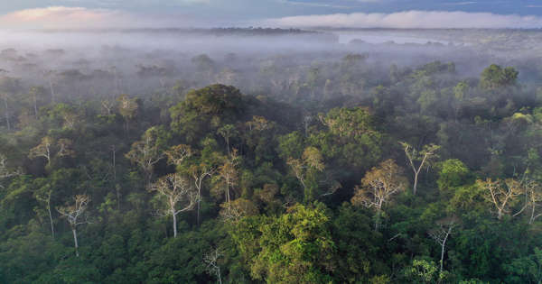 Researchers are Working Together for Transforming Global Tropical Forests