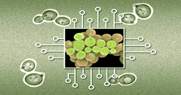 Synthetic Biologists Developed an Approach to Designing Synthetic Biology Circuits
