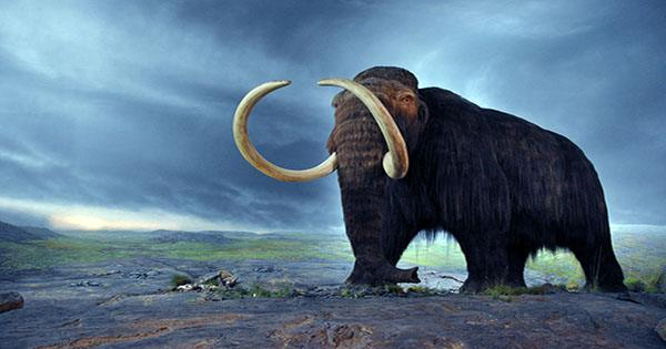 17,000 Years Ago, a Wooly Mammoth Trekked Far Enough to Circle Earth Twice