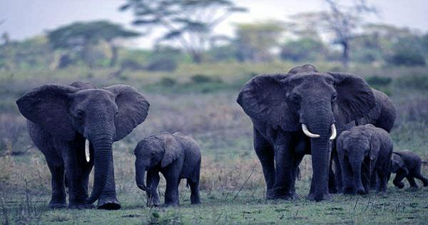 Elephants Sold to Overseas Buyers for Just $7,000 in Controversial Auction in Namibia