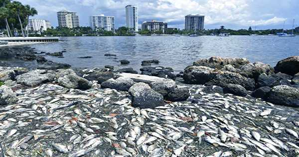 Florida Coasts are Currently being Overwhelmed by Dead, Rotting, Stinky Fish
