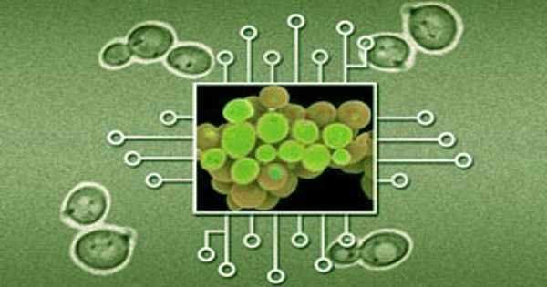 In Seconds Synthetic Biology Circuits can react on Protein-protein Interactions