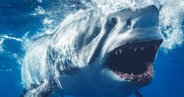 It Turns Out Sharks have Fans, and Twitter Loves to See it