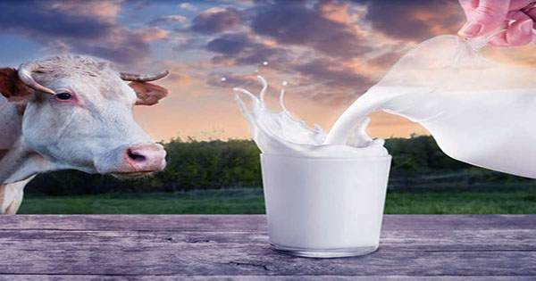 Lab-Grown Lactose-Free Milk could be coming to Supermarkets near you