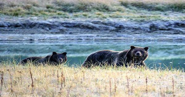 Man Rescued after Week-Long Ordeal with Grizzly Bear in Alaskan Wilderness
