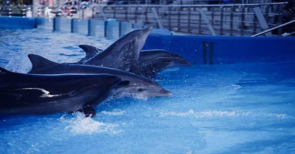Never-before-Seen Virus Found in Hawaiian Dolphin Could Spark Mass Marine Mammal Deaths