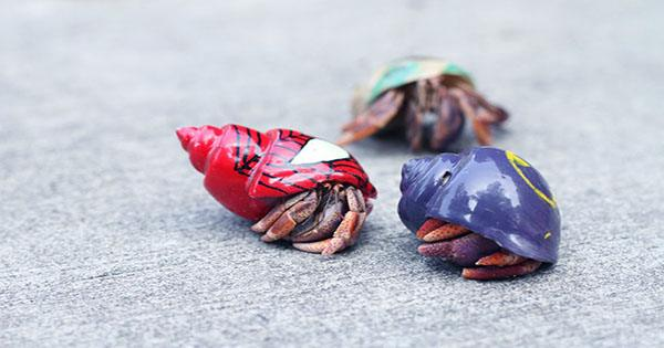 No, Hermit Crabs aren't Hot for Plastic, Some Shrimps on the Other Hand