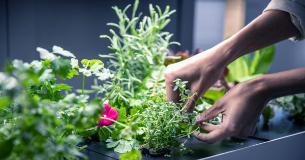 Rise Gardens Grows with $9M Series a to help anyone be an Indoor Farmer