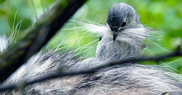 """""""What the Pluck?"""" Study Finds Birds Flagrantly Thieve Living Mammals' Fur"""