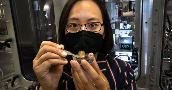 A Materials Chemist Reveals Mystery of the Flexible Shell